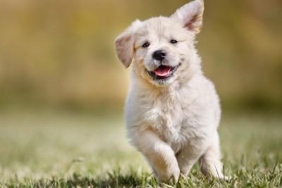 Что необходимо приобрести для щенка в зоомагазине? Уход и гигиена