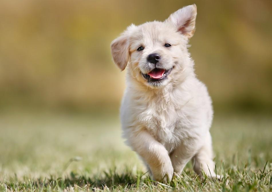 Что необходимо приобрести для щенка в зоомагазине? Уход и гигиена>