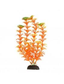 Растение Амбулия оранжевая